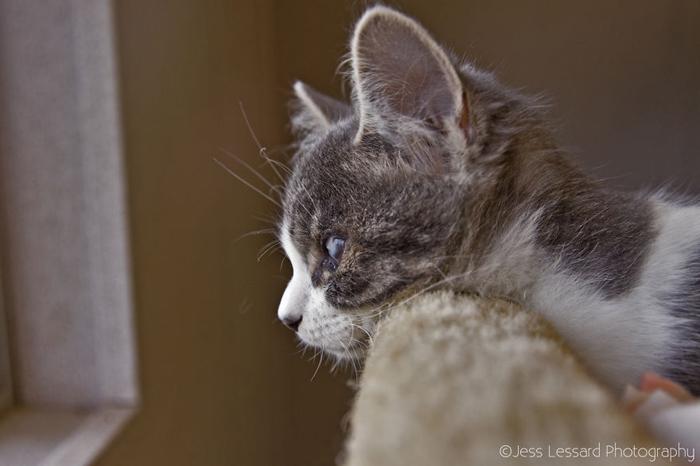 Даже слепой котенок может найти свой дом.