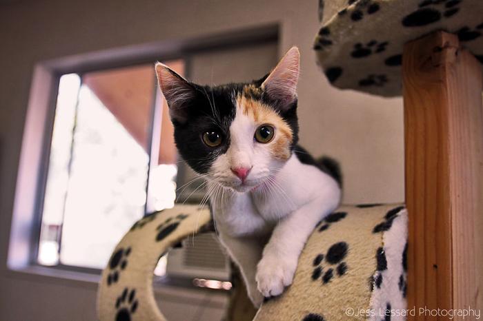Милая любопытная кошечка.
