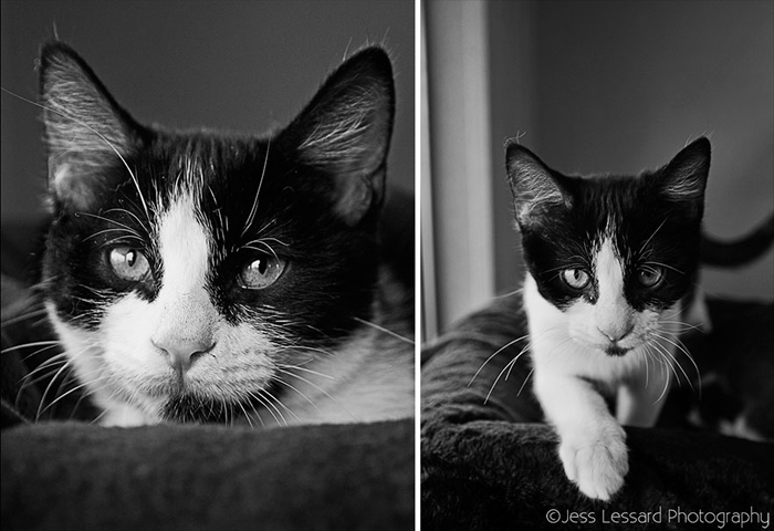Фотографии котов из приюта.