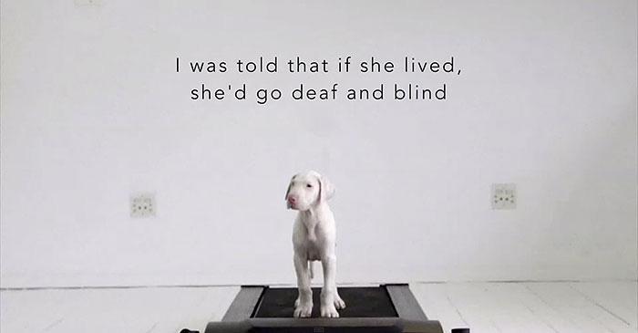 Мне сказали, что если собака выживет, она ослепнет и оглохнет.