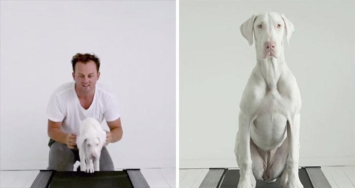 Спасенная собака Пегас.