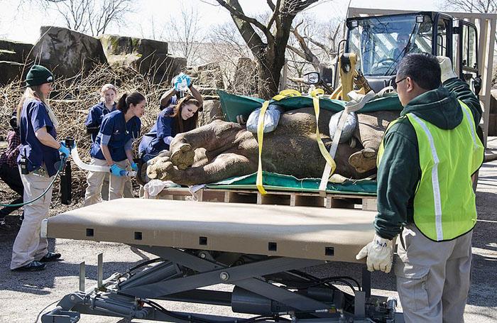 В процедуре обследования носорога было задействовано 40 человек.