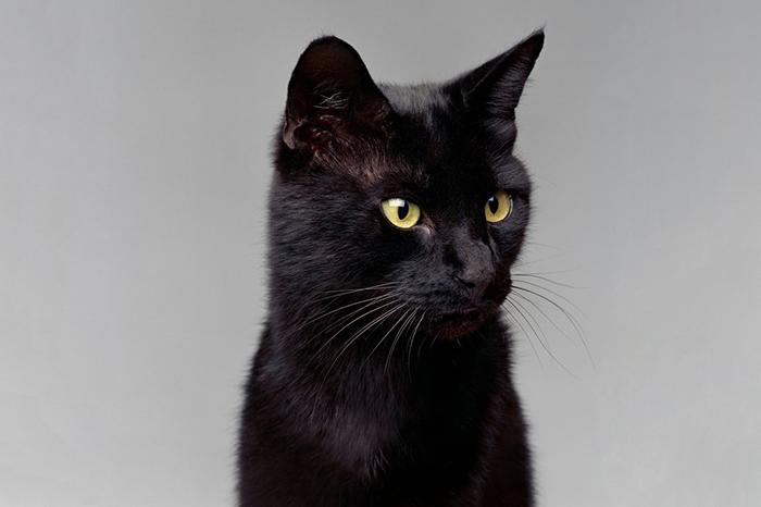 Блэки - самый богатый кот в мире.