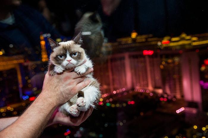 Сердитый котик, принесший его хозяйке миллионы.
