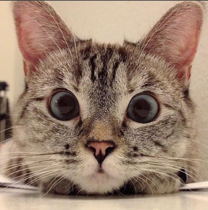 Кошка Нала.