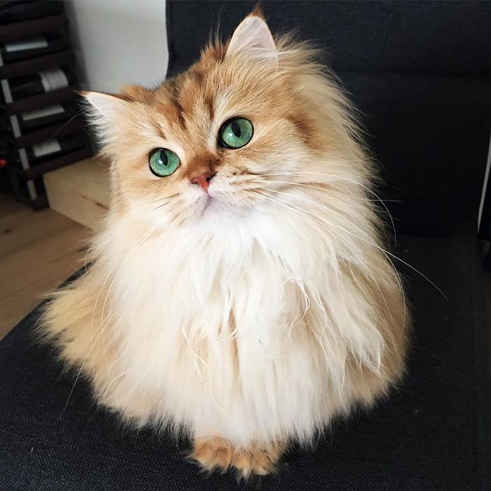 Зеленоглазая красавица Смузи.