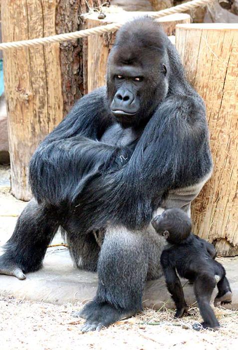 Ричарда часто можно увидеть вместе со своими детьми. На снимке он со своим сыном Аджаби.