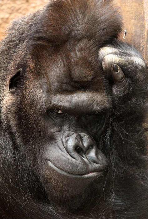 Ричард из пражского зоопарка.