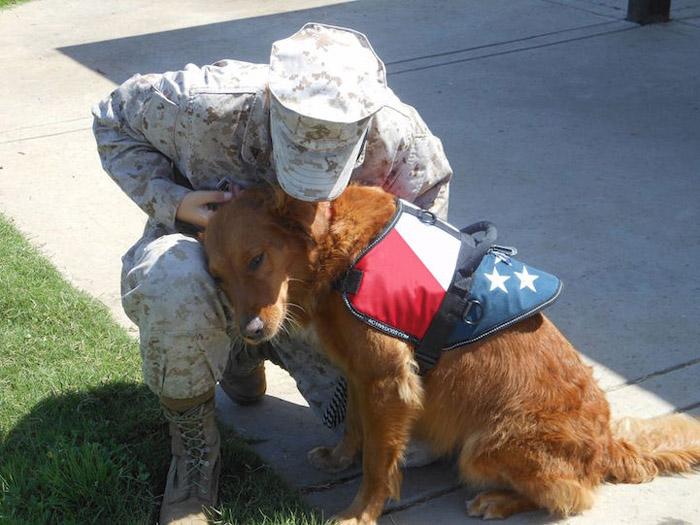 Терапевтическая собака-герой Рикошет.