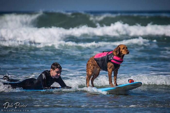 Серфинг с собакой - один из видов терапии.