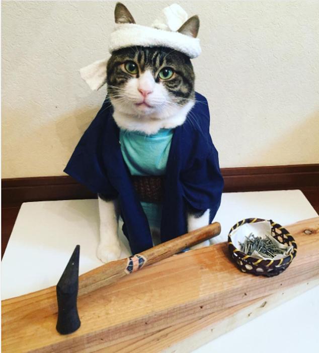 22 ноября в Японии празднуется День плотника. Instagram rinne172.