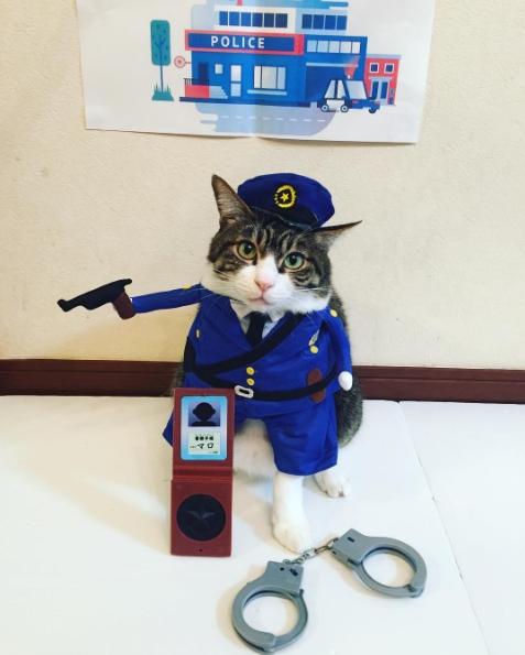 Кот-полицейский. Instagram rinne172.