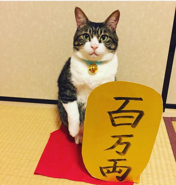 29 сентября в Японии отмечают день *Манящего кота*. Instagram rinne172.