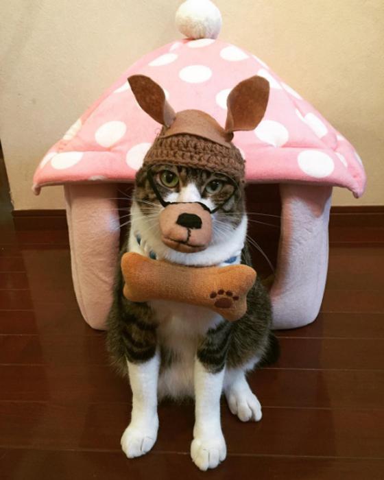 1 ноября в Японии отмечают День Собаки.  Instagram rinne172.