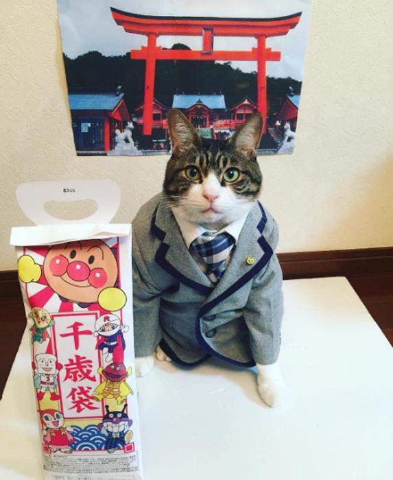 Шичи-го-сан, что означает *семь, пять и три*, - это ежегодный праздник здоровья и счастья девочек в возрасте 3 и 7 лет, и мальчиков 3 и 5 лет. Instagram rinne172.