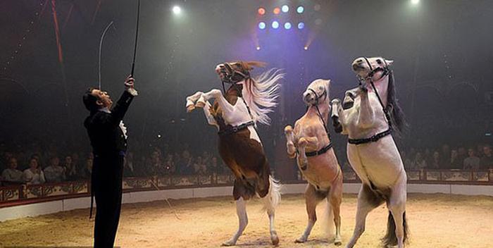 Большинство цирков до сих пор используют живых зверей в своих представлениях.