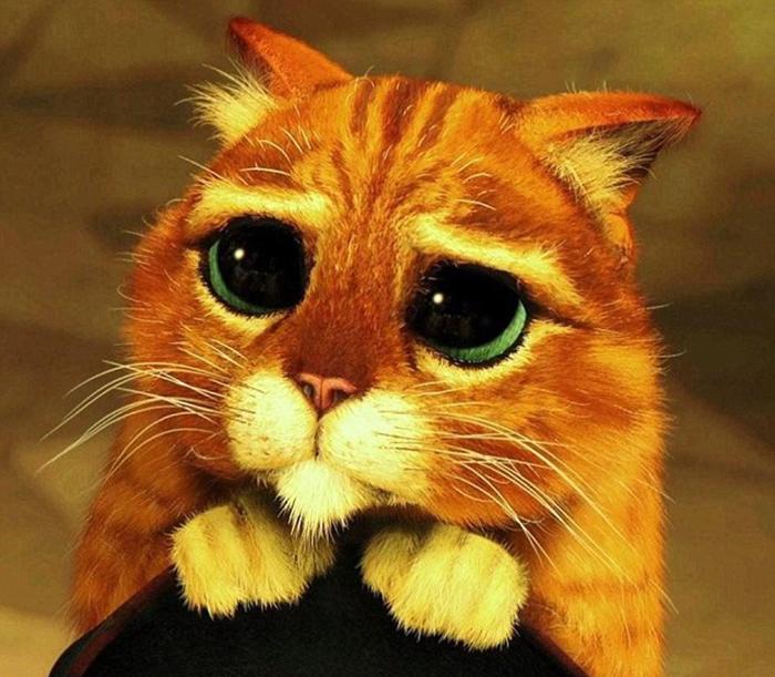 Луу часто сравнивают с Котом в Сапогах из мультфильма *Шрек*.