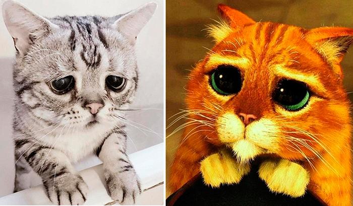 Кошечка Луу из Китая.