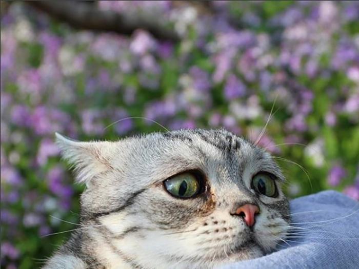 Сказать спасибо, картинки виноватая кошка