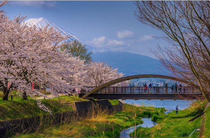 Парк цветущих сакур. Фото: Danilo Dungo.