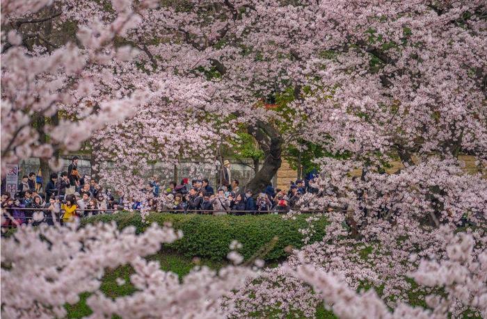 Парк в Токио. Фото: Danilo Dungo.