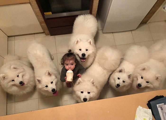 Дома у Сары часто не четыре, а много больше собак.