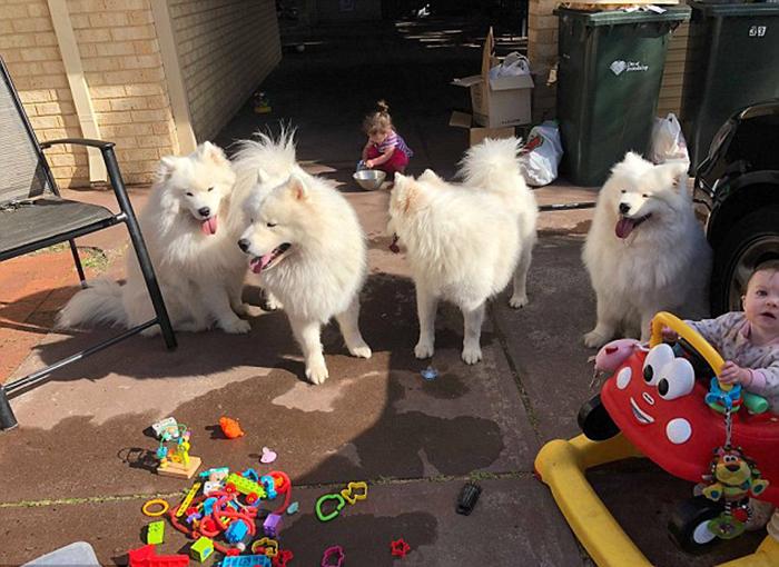 Дети и собаки проводят много времени вместе.