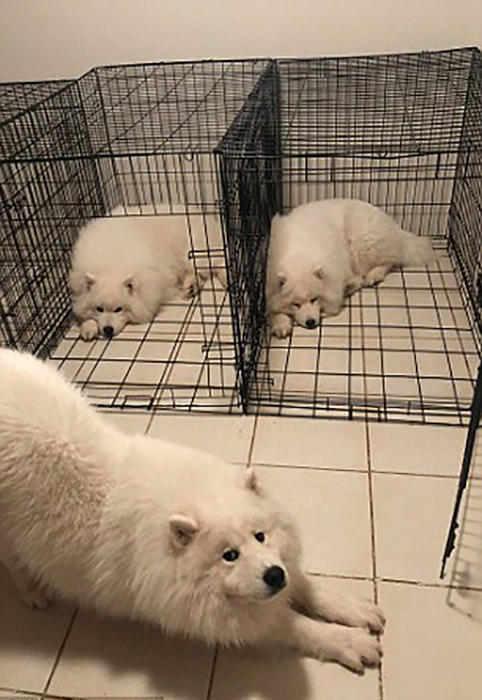 Собаки живут в своих клетках, которые стоят дома открытыми.