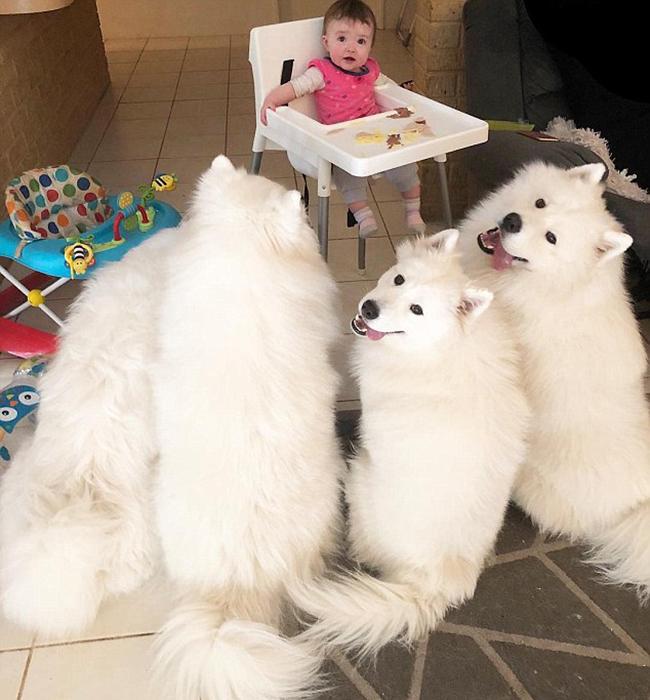 Дети нередко делятся с собаками едой, так что они знают, где могут получить дополнительную вкусняшку.