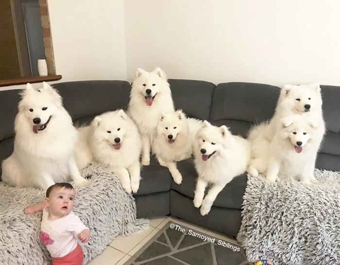 Жизнь с детьми и собаками.