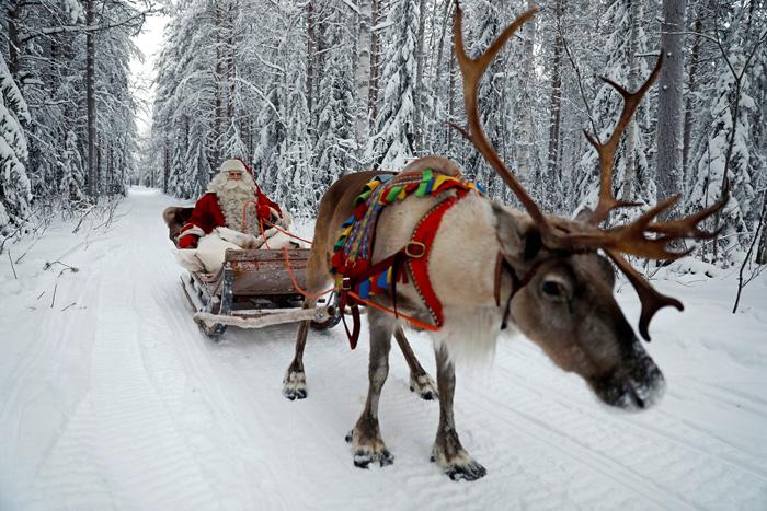 Санта Клаус на санях, запряженных оленем. 15 декабря 2016.