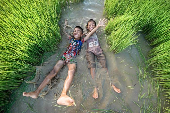 Рисовые поля требуют много воды.