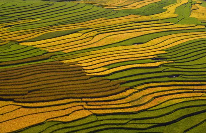 Террасовые поля Вьетнама.