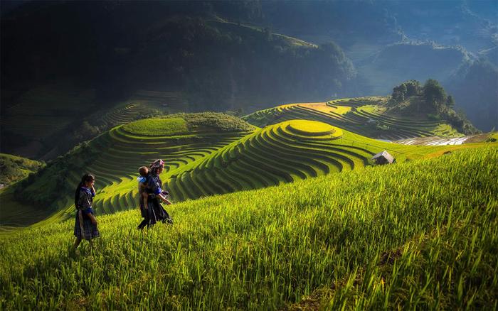 Рисовые поля во Вьетнаме.