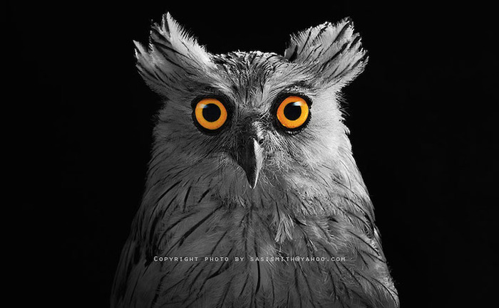 Птичий портрет.