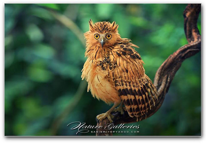 Птичьи портреты от Саси Смита.