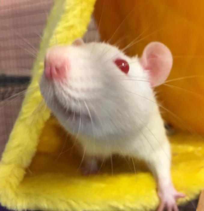Лаборатория сама обратилась к помощи приюта, чтобы спасти подопытных животных от гибели.