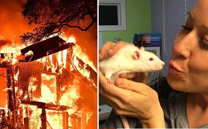 Девушки ринулись спасать лабораторных крыс.