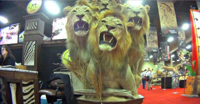 Убитые львы.