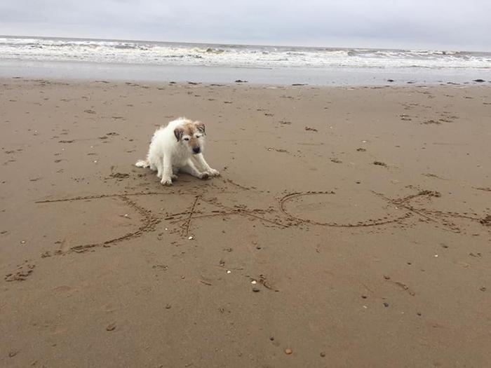 Никола старается сделать последние дни собак счастливыми и спокойными.