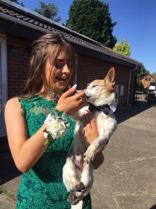 Одна из собак даже провожала дочь Николы на выпускной.