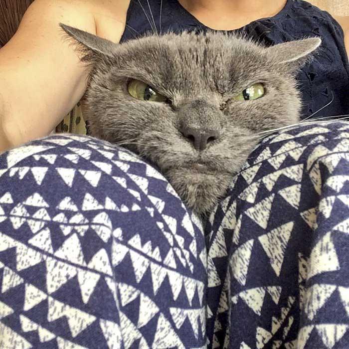 Шамо очень любит сидеть на коленях у работников приюта.