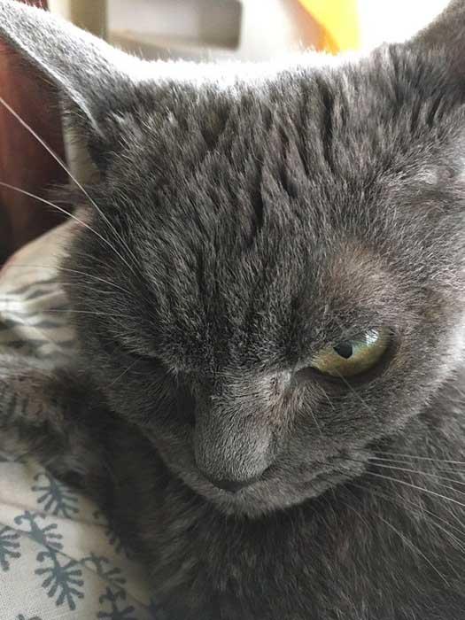 Из-за своей специфической внешности Шамо уже год живет в приюте.