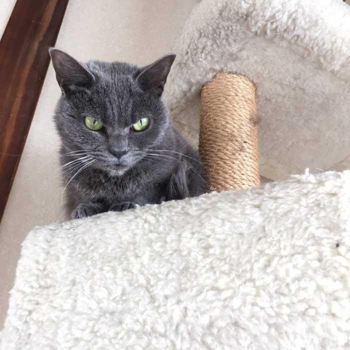 Выражение мордочки этой кошки никак не отражает ее настроение.