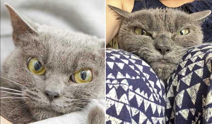 Шамо - самая угрюмая кошка в мире.