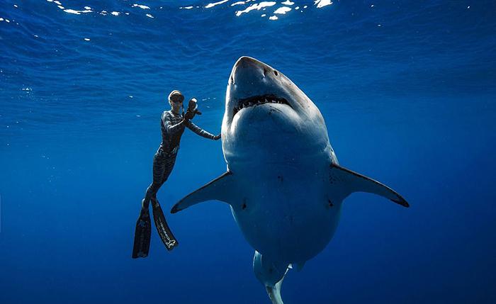 Самая большая акула в мире.