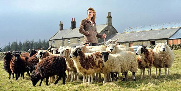 В отаре Эмме порядка 400 овец.