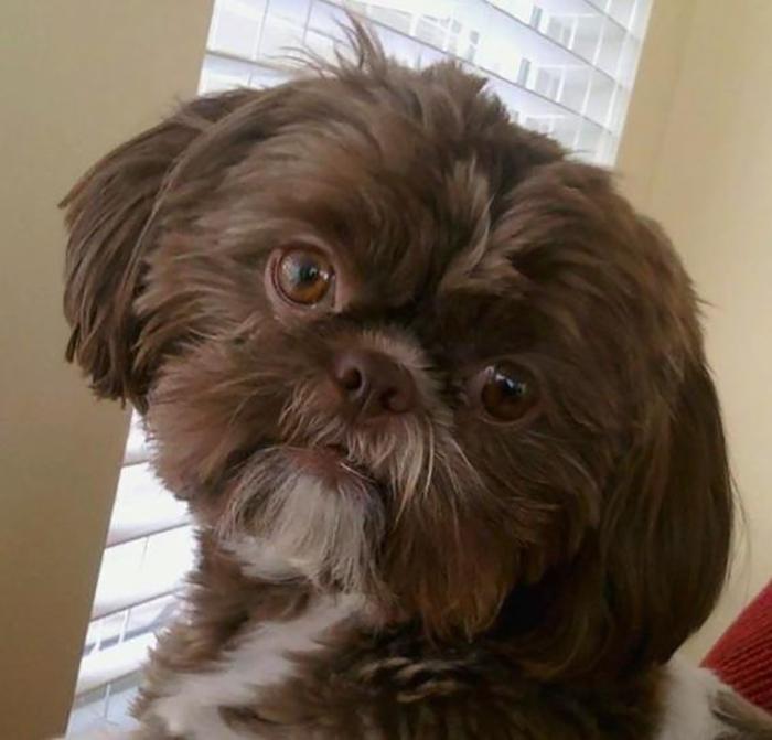 В марте в Честерфильде усыпили полностью здоровую собаку, так как этого пожелала его Ñозяйка.