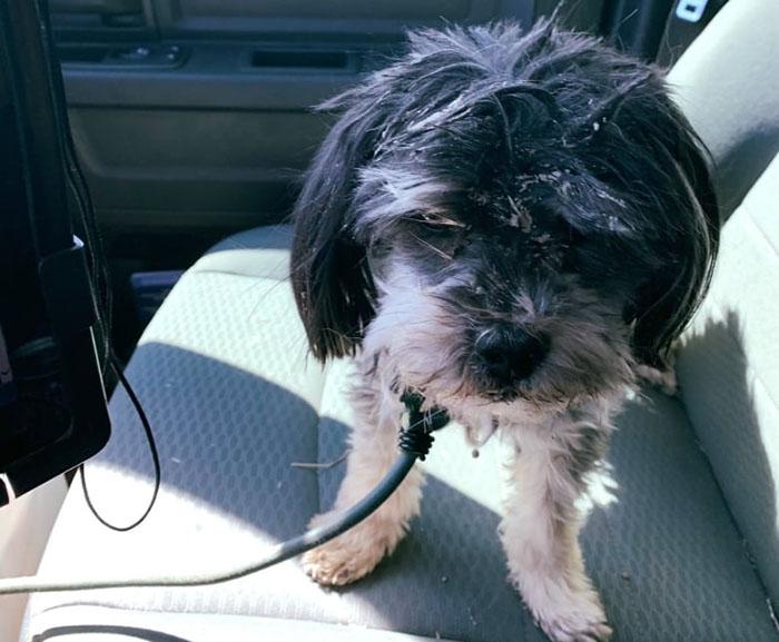 Собаку Грегори позже забрал помощник шерифа и вывез ее в город.