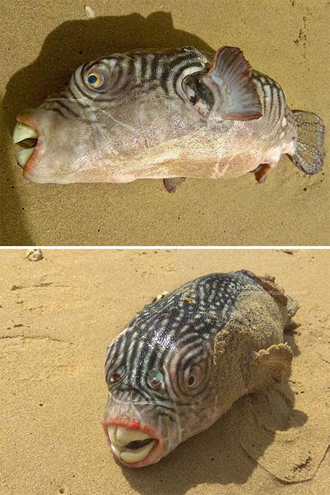 Необычная рыба.